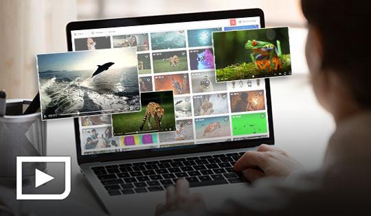 用戶在使用電腦的過肩視圖,並在螢幕上顯示圖庫